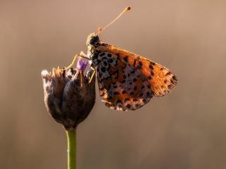 обои Бабочка сложив крылешки у бутончика цветка фото