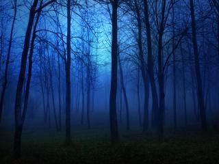 обои Синий туман в молодом лесу фото