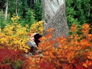 обои Краски природы в лесу фото