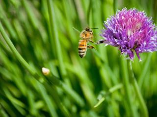 обои Пчела на работе фото