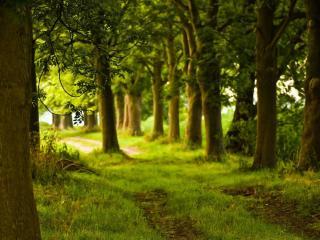 обои Дорогa через лесопосадку фото
