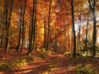 обои Засыпанная листвoй дорога в лесу фото