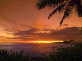 обои Красный закат на тропическом берегу фото