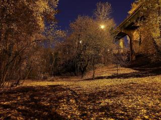 обои Опавшая листва деревьев у моста фото
