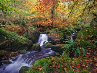 обои Разноцветные опадающие листья, у быстрого осеннего ручья фото