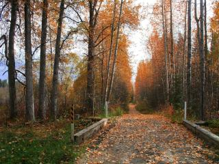 обои Опадающая листва на дороге фото