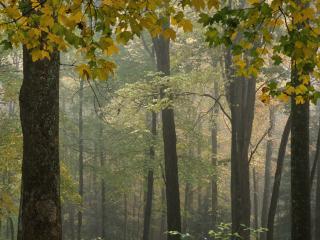 обои Пейзаж леса ранней осенью фото