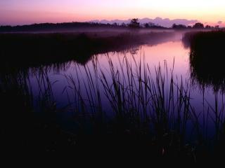 обои Летний пруд с камышами, на закате фото