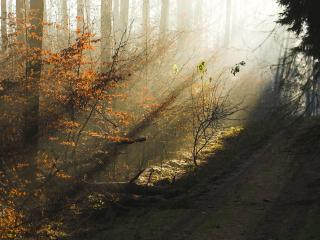 обои Туман у дороги в лесу осенним фото