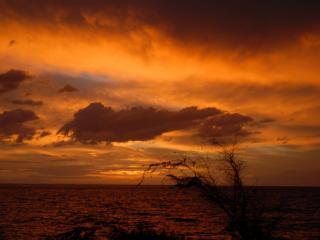 обои Куст  у моря  в  тиши заката фото