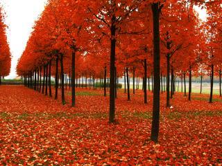 обои Оранжевый листопад на аллеях фото