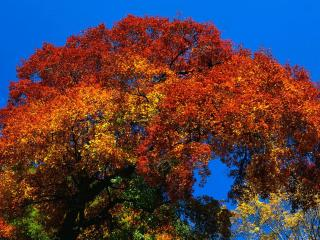 обои Осенняя листва дерева золотится погожим днем фото