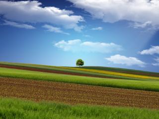 обои Красивые поля на склоне фото
