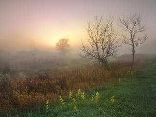 обои Туманное,   осеннее утро фото