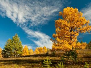 обои Янтарная осень фото