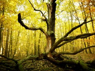 обои Сломанное сухое дерево в осеннем лесу фото