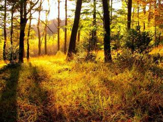 обои Осеннее солнышко на опушке леса фото