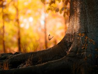 обои Осенняя бабочка у ствола дерева фото
