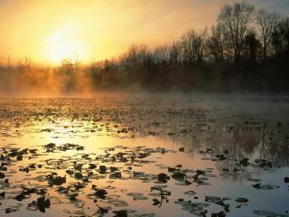 обои Весенний пруд с лилиями, на закате фото