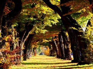 обои Ряд мощных деревьев фото