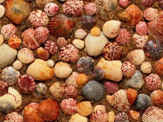 обои Разноцветные ракушки морские выложены на песке фото