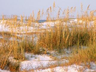 обои Заснеженный берег озера фото