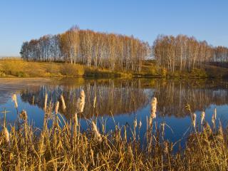 обои Осенний пейзаж у пруда фото