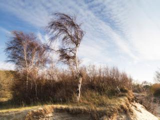 обои Осенний Балтийский берег фото
