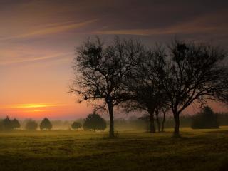 обои На деревенских просторах туман фото