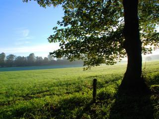 обои Дерево у зеленеющего поля фото