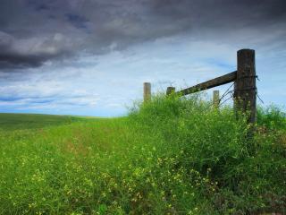обои Бескрайние зеленые поля фото