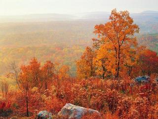 обои Осенний туман в лесу фото