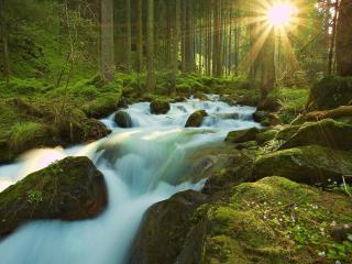 обои Свежее весеннее утро, у лесного ручья фото