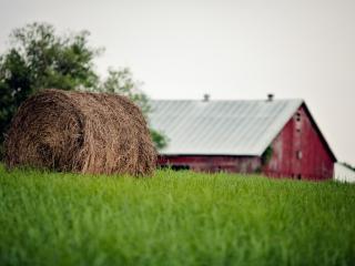обои Сено в скрутке на лужайке фото
