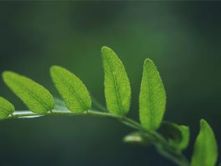 обои Нежность зеленой веточки фото