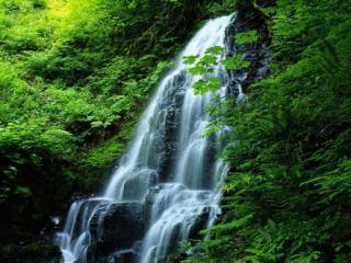 обои Водопад в густом лесу фото