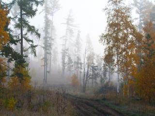 обои Туман поздней осени фото