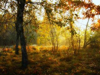 обои Осеннее утро в лесу фото