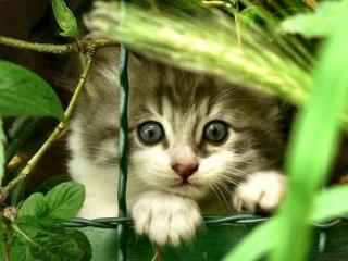 обои для рабочего стола: Котенок в растениях