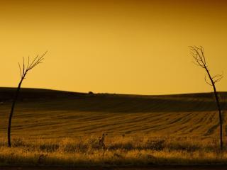 обои Два одиноких деревца в поле фото