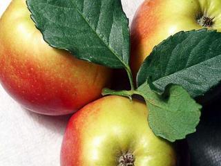 обои Яблоки и листочки фото