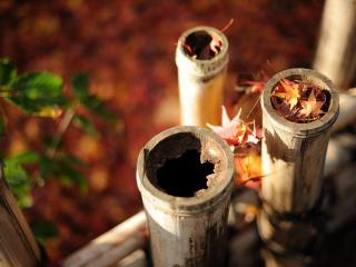 обои для рабочего стола: Старый бамбуковый забор и листва опавшая