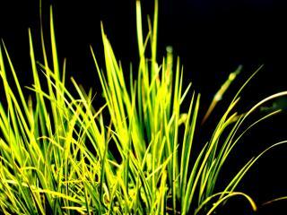 обои Трава на черном фоне фото