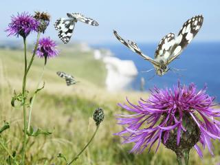 обои Бабочка садится на цветок фото