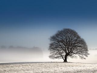 обои Дерово на фоне тумана фото