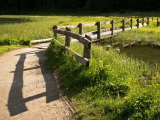 обои Деревянный мостик через реку ведущий к лесу фото