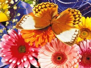 обои Найдите бабочку фото