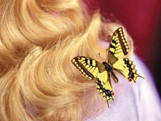 обои Бабочка и блондинка фото