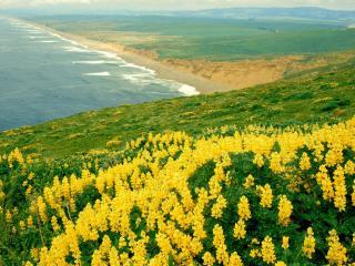 обои Поле цветов на фоне моря фото