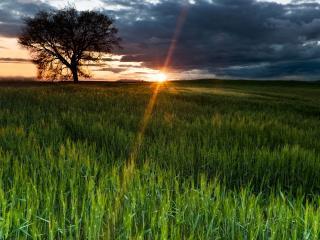 обои Яркий луч падающий на зеленое поле фото